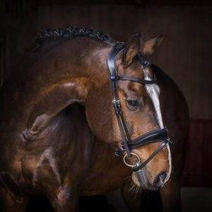 PS OF SWEDEN FLYING CHANGE REVOLUTION BRIDLE